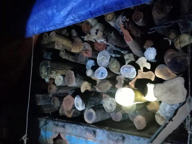 wood-kpch03
